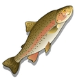 Trout closeup on a white background fish vector image