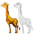 doodles drafting animal for giraffe vector image