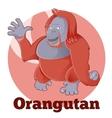 ABC Cartoon Orangutan vector image