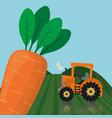 farm fresh vegetables carrot product vector image