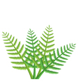 green fern leaves vector image