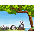 Pandas sitting under the tree vector image