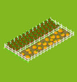 red bell pepper and pumpkins beds planted at farm vector image