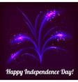 firework in honor of Independence Day vector image