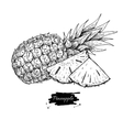 hand drawn pineapple and sliced pieces vector image