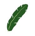banana leave decorative tropical foliage icon vector image
