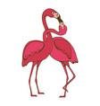 flamingo couple kissing romantic poster vector image