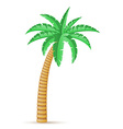 palm 03 vector image vector image