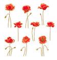 set of 9 poppy flower vector image