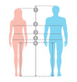 human body measurements and proportions vector image