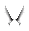 Gray pair wings vector image