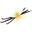 Vanilla pods and flower vector image