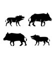 boar icons and symbol in silhouette style vector image