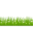 Green grass with blooming chamomiles isolated vector image