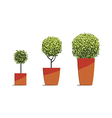 Tree round shape in pots isolated on white vector image