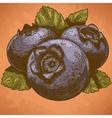 engraving blueberry retro vector image