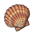 Colorful saltwater scallop sea shell isolated vector image