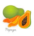 papaya whole and half papaw or pawpaw ediable vector image