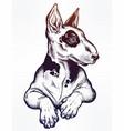 vintage style bull terrier in flash art tattoos vector image