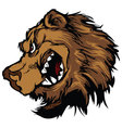 bear grizzly mascot head cartoon vector image