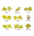 herbs and spices set sketches for labels vector image