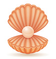 shell 03 vector image vector image