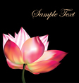 Pink lotus on black background vector image vector image