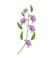 Bunch of Purple Crape Myrtle Flowers vector image vector image