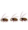 Funny cockroach walking vector image