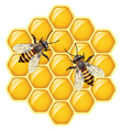 bees on honeycells vector image vector image