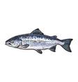 sketch cartoon sea fish salmon isolated vector image