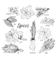 Collection of herbs vector image