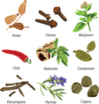 set of different spices vector image