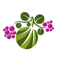 flat green leaf with tendrils and purple seeds vector image