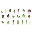 Set of salad bowl Leafy vegetables green salad vector image