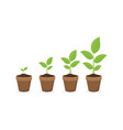 growing plant in process on white background vector image