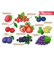 Set of juicy berries vector image