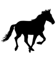 silhouette of the black horse vector image
