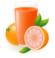 grapefruit juice vector image vector image