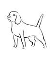 beagle dog vector image