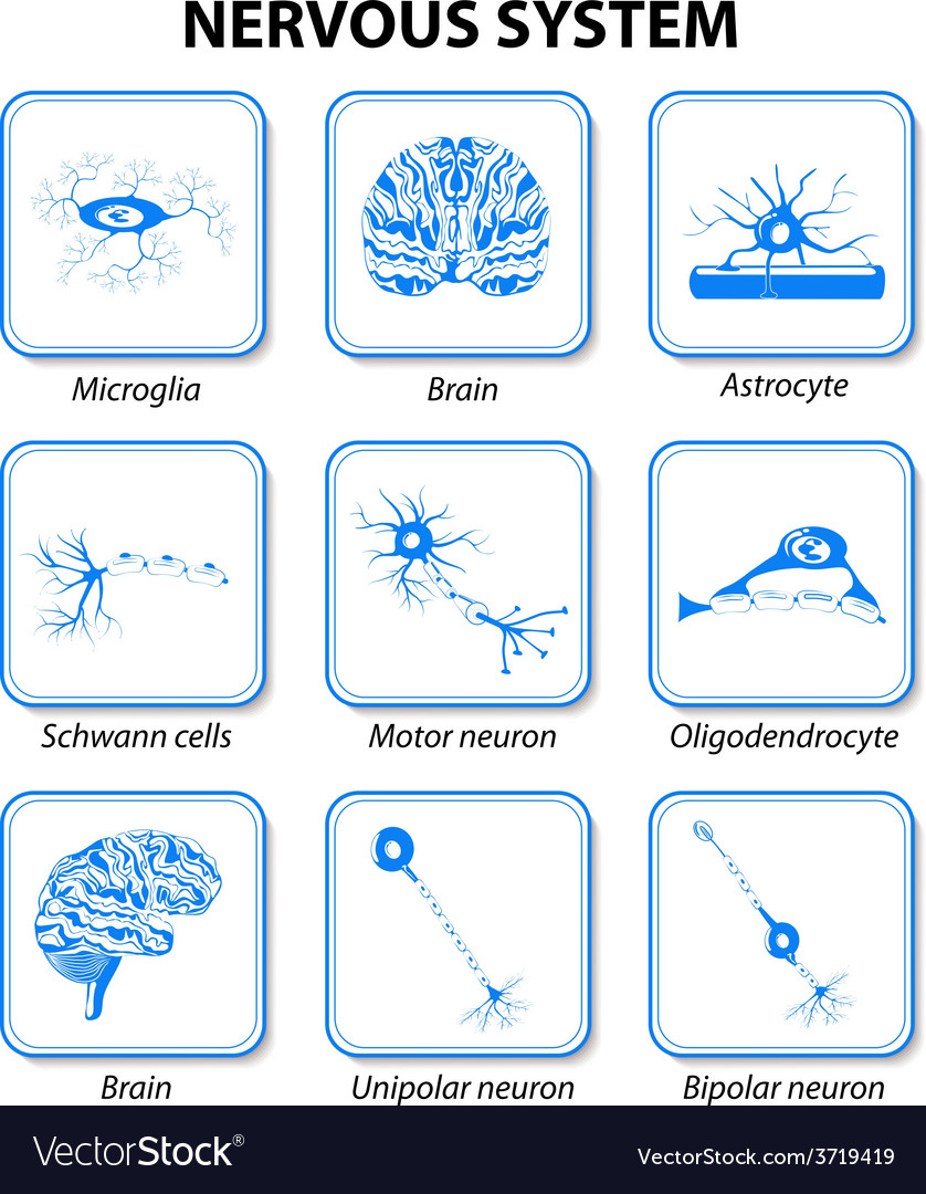 Icon nervous system vector