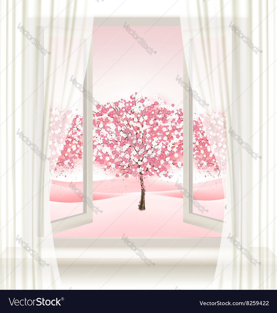 Pink cherry blossom tree view from a window vector