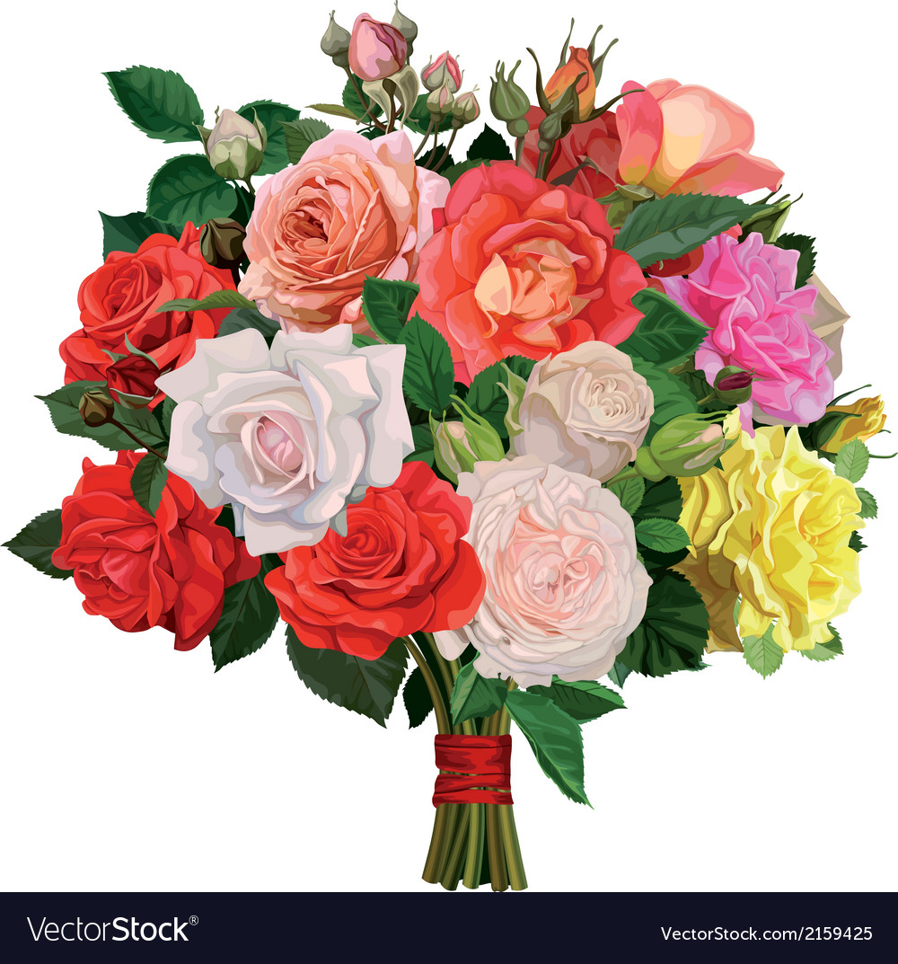 Bouquet of colored roses vector