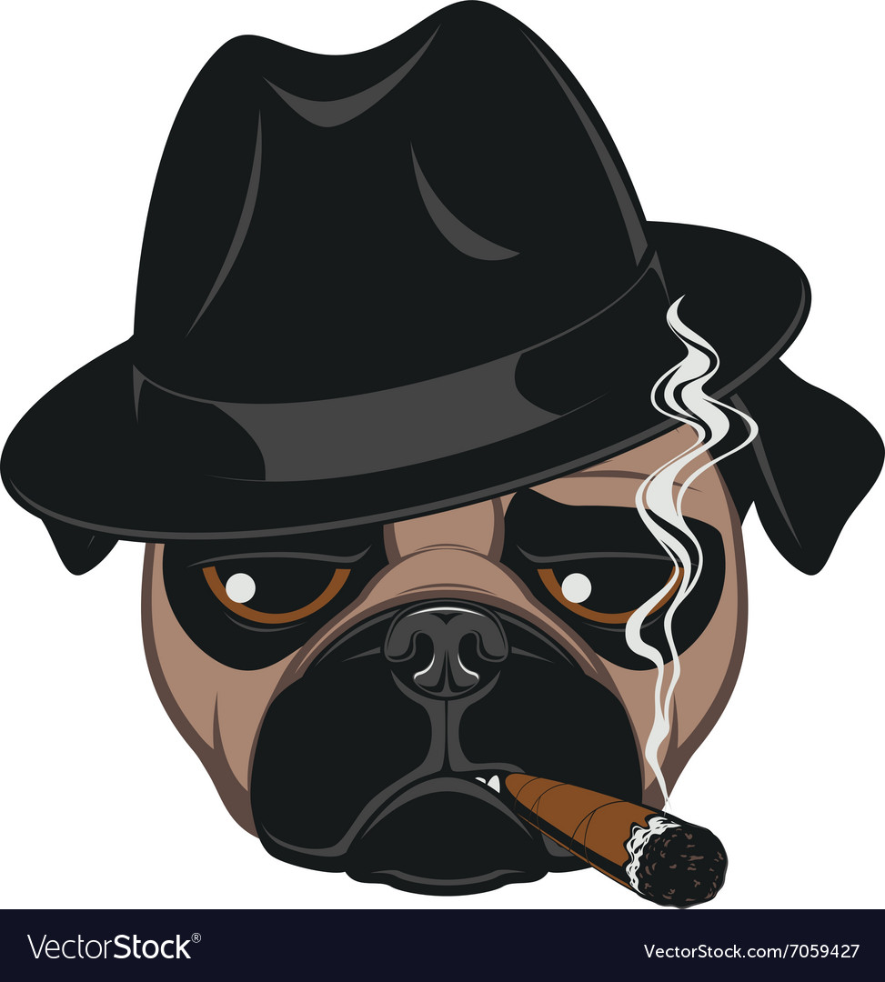 Funny pug with cigar vector