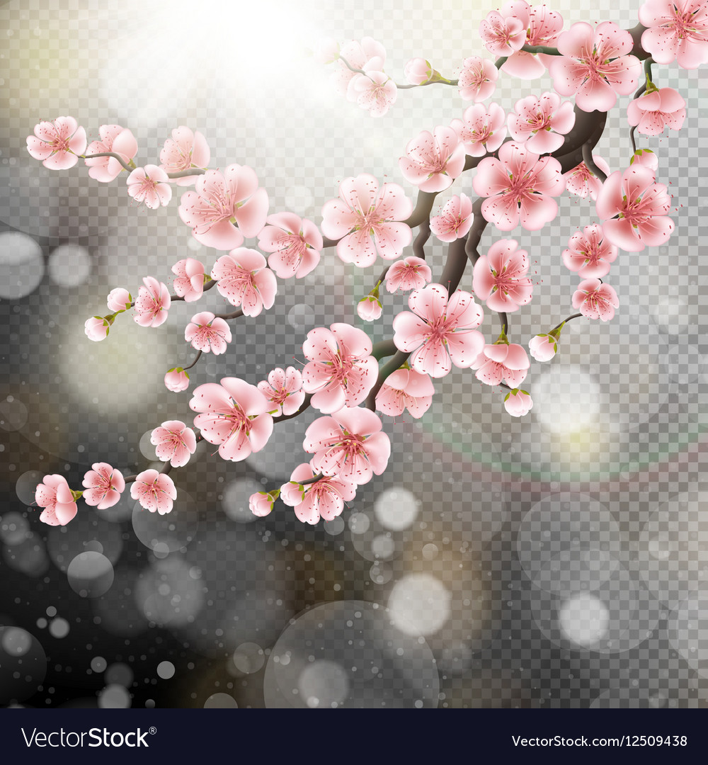 Blossoming pink sakura flowers eps 10 vector