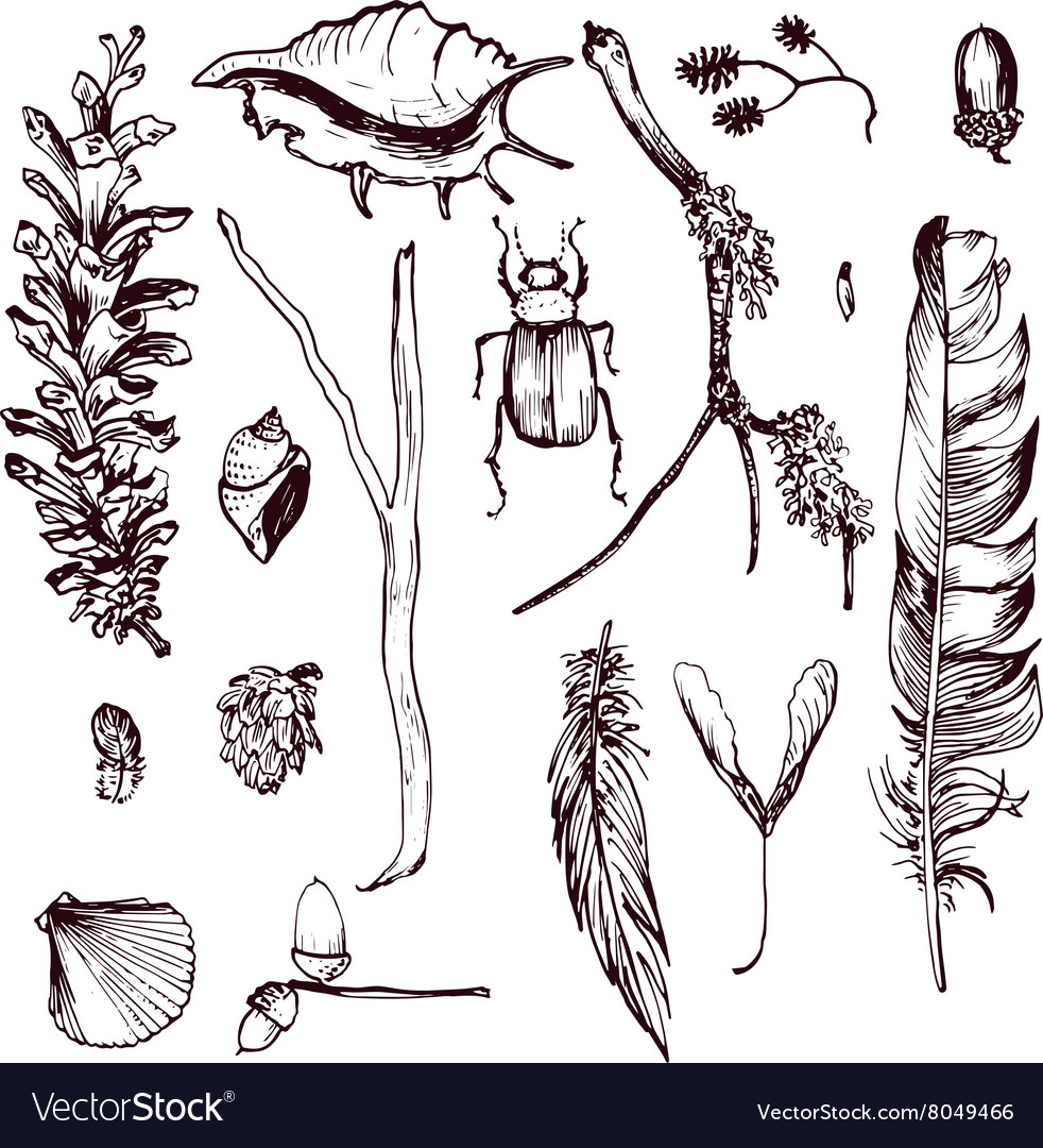 Set of forest objects vector