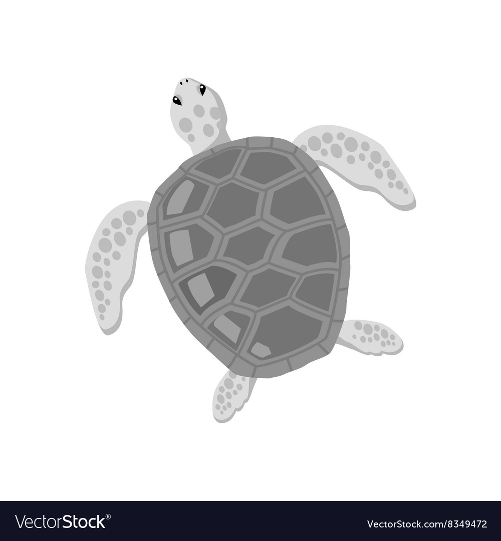 Turtle isolated on white background vector