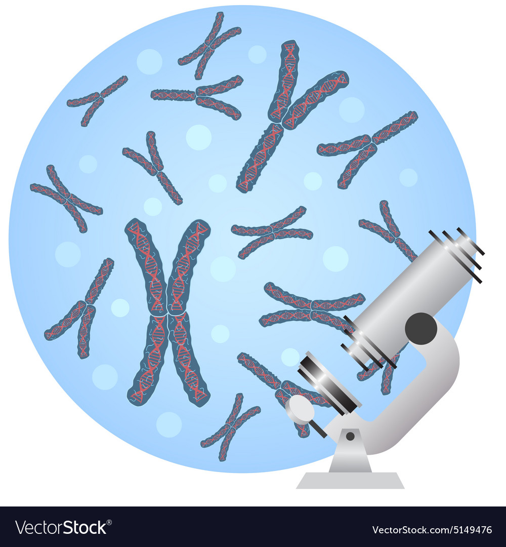Microscope and chromosomes vector