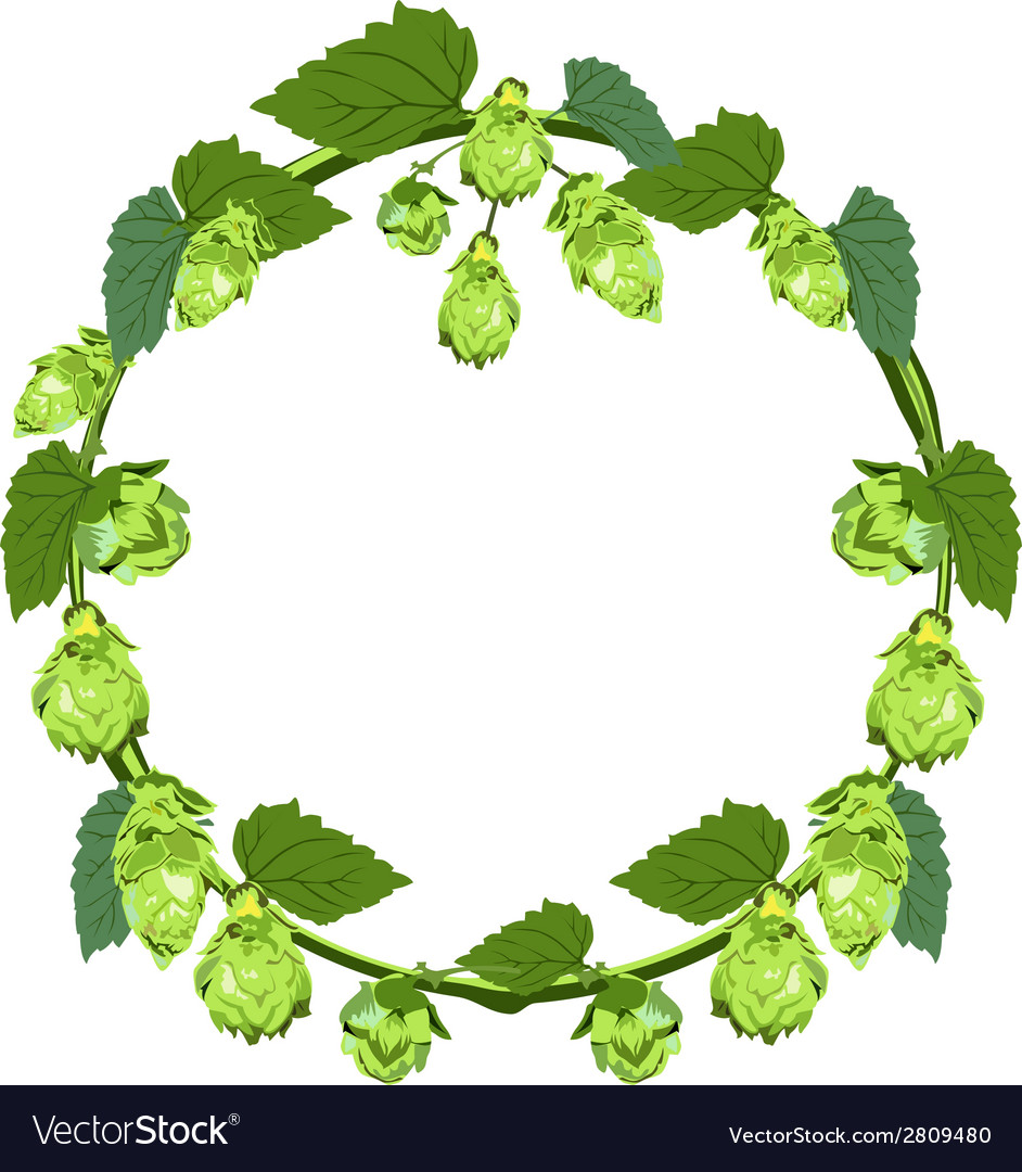 Wreath of hops in the form of a circle vector