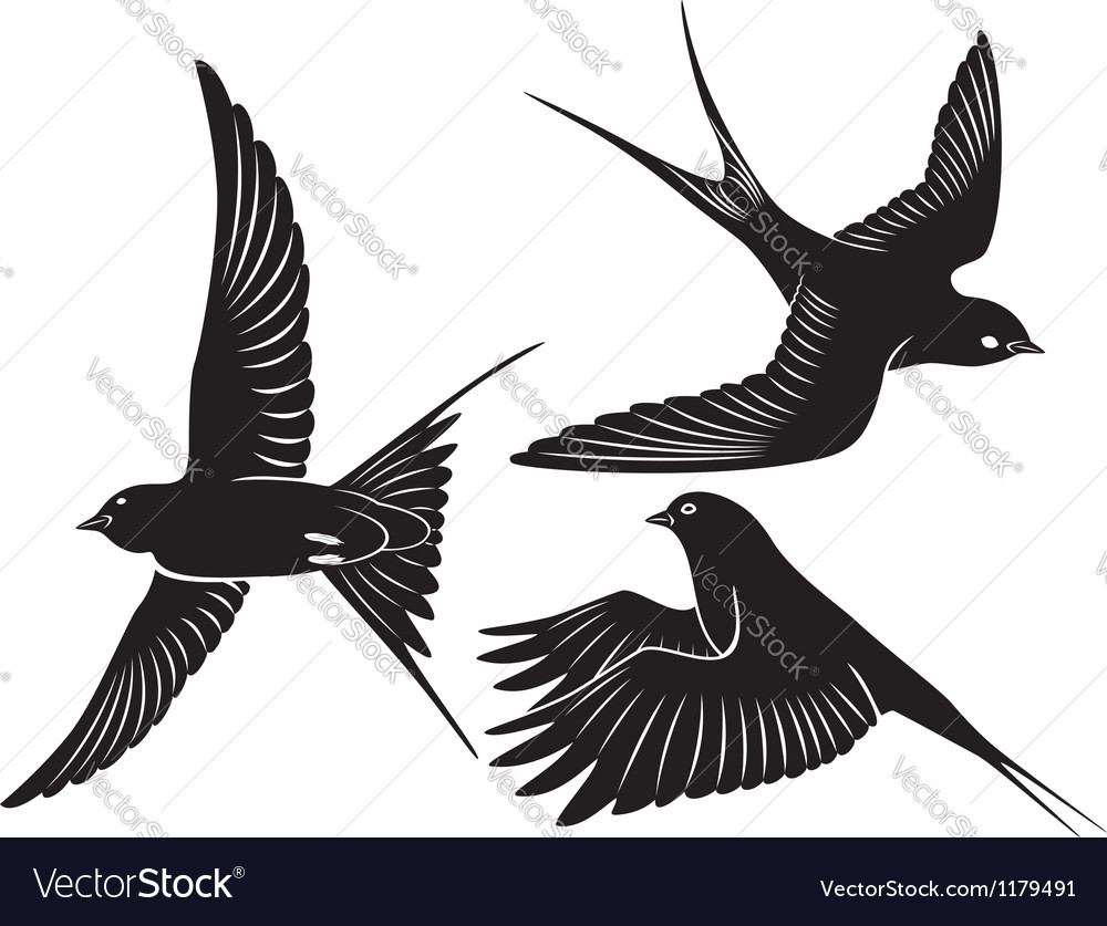 Bird swallow vector